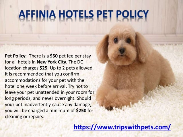 Pet friendly policies pet friendly hotels guide for Dog friendly hotels nyc