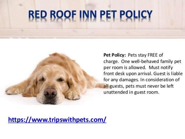 Best Dog Friendly Hotel Colorado