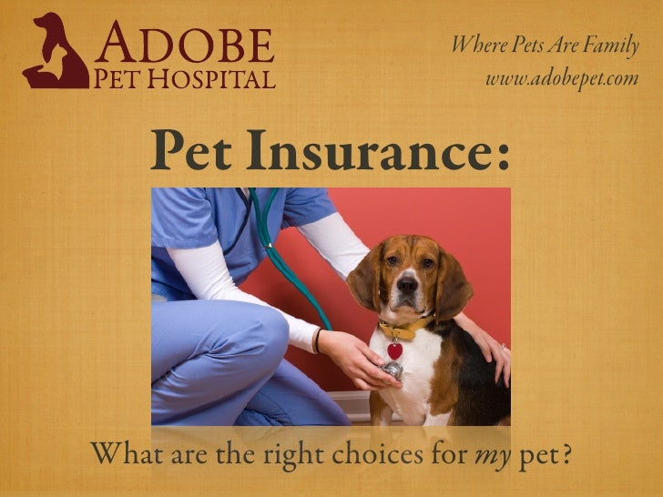 Where Pets Are Family                               www.adobepet.com       Pet Insurance:    What are the right choices fo...