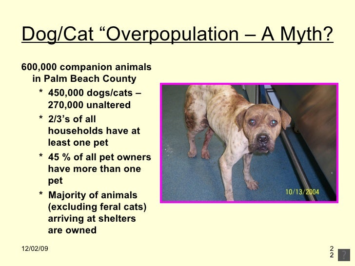 pet overpopulation Pet overpopulation prevention 9,193 likes 537 talking about this 210 were here popp is a volunteer based, no-kill pet rescue supported by the.