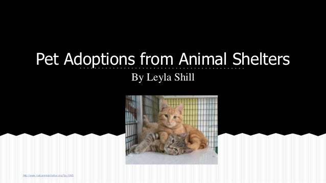 Pet Adoptions from Animal Shelters By Leyla Shill http://www.nafcanimalshelter.org/?p=1985