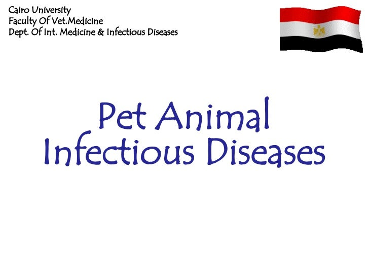 Cairo UniversityFaculty Of Vet.MedicineDept. Of Int. Medicine & Infectious Diseases            Pet Animal        Infectiou...