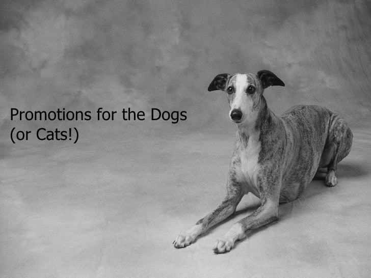 Promotions for the Dogs(or Cats!)