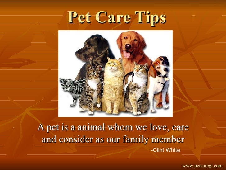 Pet Care Tips A pet is a animal whom we love, care and consider as our family member -Clint White www.petcaregt.com