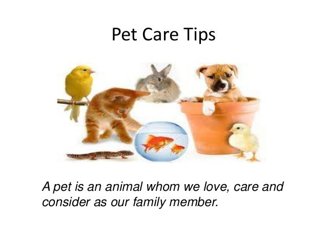 pet care tipsa pet is an animal whom we love care andconsider as our