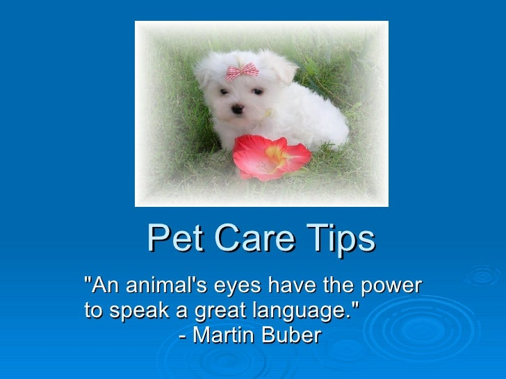 """Pet Care Tips """"An animal's eyes have the power to speak a great language.""""  - Martin Buber"""