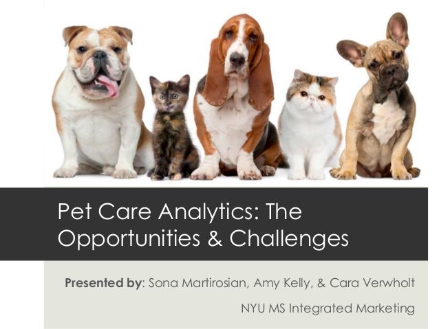 Using Web Analytics to Find Opportunities for the Pet Care Industry