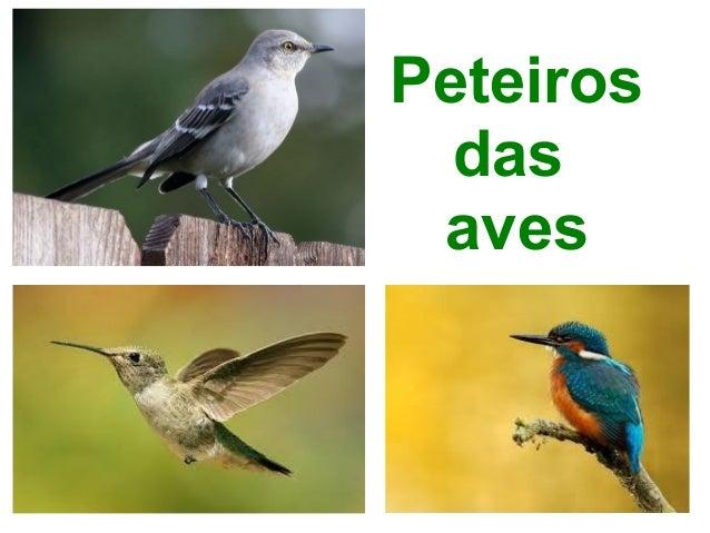 Peteiros das aves