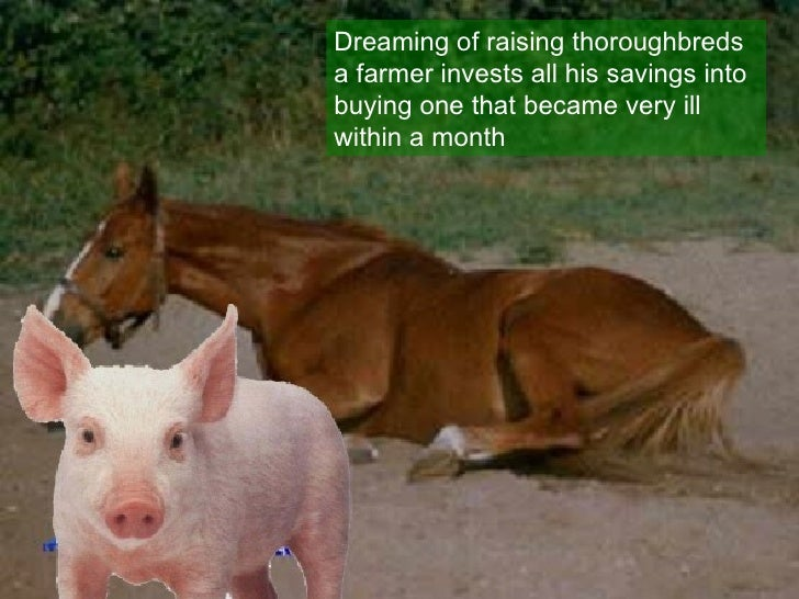 Dreaming of raising thoroughbreds a farmer invests all his savings into buying one that became very ill within a month