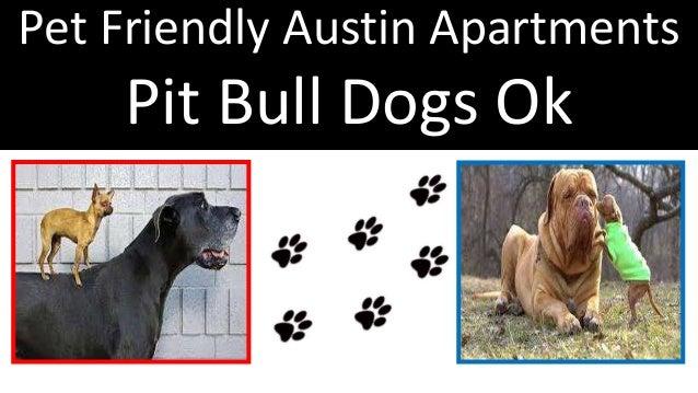 Pet Friendly Austin Apartments Pit Bull Dogs Ok