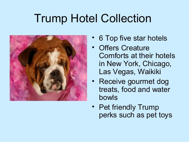 Best Dog Friendly Hotel Chains