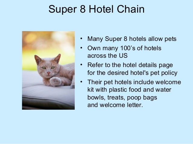 Hotels That Allow Pets Www Picswe Com