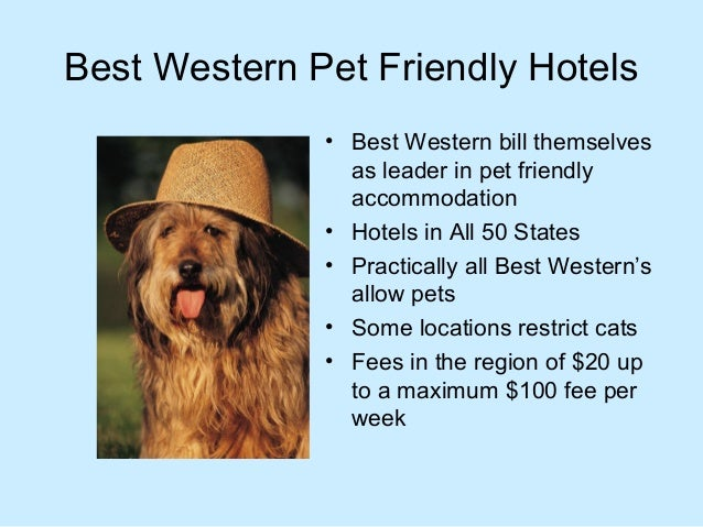 Best pet friendly hotels chains in the usa that welcome for Best hotels for pets
