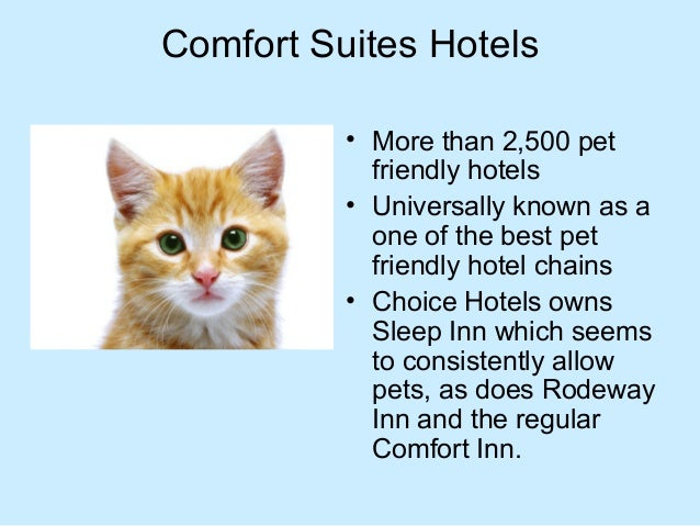 Best Pet Friendly Hotels Chains In The Usa That Welcome Your Pet