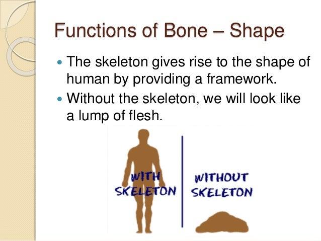 5.2 functions of skeleton, Skeleton