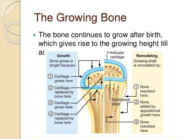 bone growth Bone growth stimulators was founded in 2015 with a vision of simplifying access to bone growth stimulators for patients and physicians.