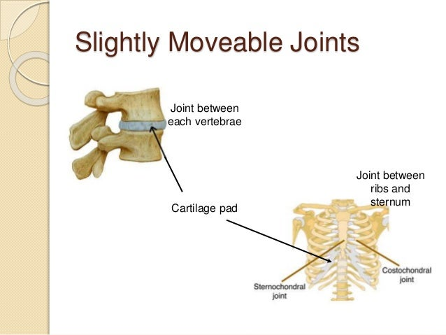 Diagram Of Different Types Of Joints Choice Image How To
