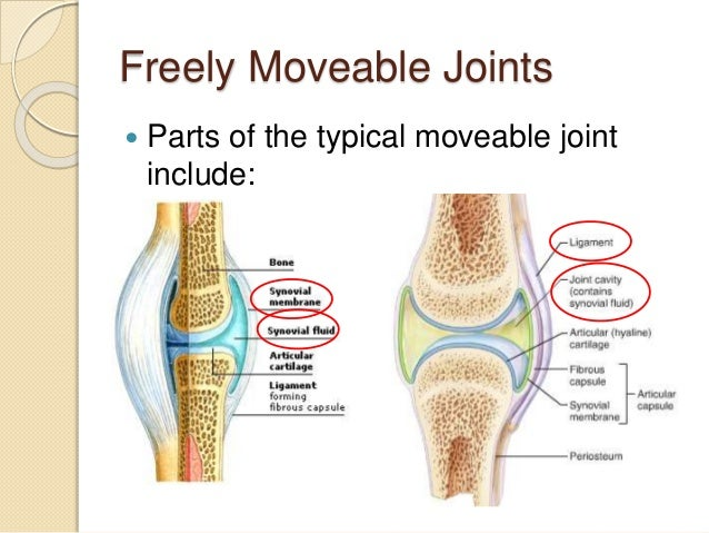 Pe Theory Lesson 54 Different Kinds Of Joints on body cavitation