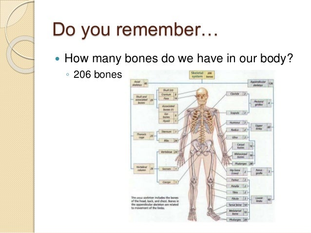 5.4 different kinds of joints, Human Body