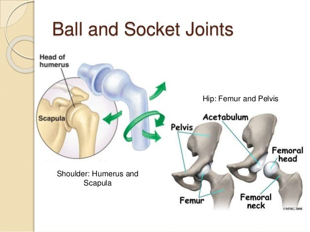5.5 synovial joints and contraindicated exercises