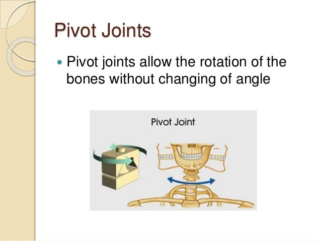 5.5 synovial joints and contraindicated exercises, Human Body