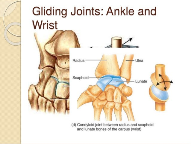 55 Synovial Joints And Contraindicated Exercises