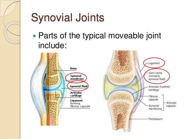 5.5 synovial joints and contraindicated exercises, Sphenoid