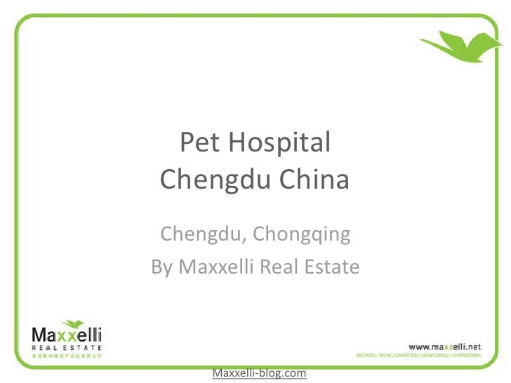 Pet Hospital  Chengdu China  Chengdu, Chongqing By Maxxelli Real Estate          Maxxelli-blog.com