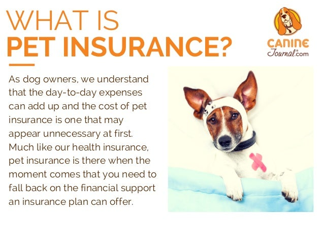 pet insurance Get affordable, worry-free health insurance for your dog or puppy our dog insurance covers dog injuries, illnesses, emergencies, genetic conditions, and up to 90% of your veterinary bills.
