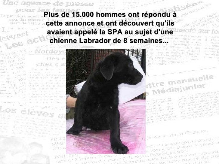 Plus de 15.000 hommes ont répondu à cette annonce et ont découvert qu'ils avaient appelé la SPA au sujet d'une chienne Lab...