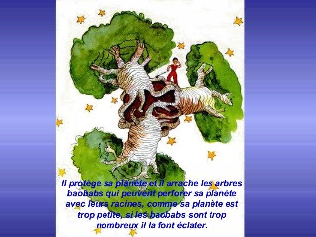 ..Il protège sa planète et il arrache les arbresbaobabs qui peuvent perforer sa planèteavec leurs racines, comme sa planèt...