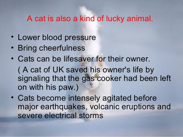 Benefits And Disadvantages Of Pets For Health A Very