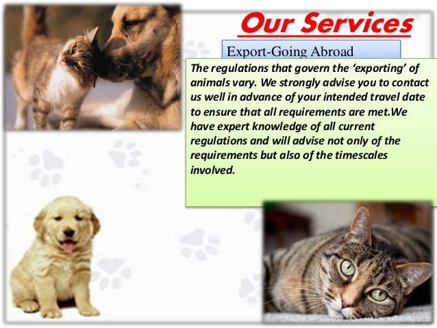 International Pet Travel Agency In Uk