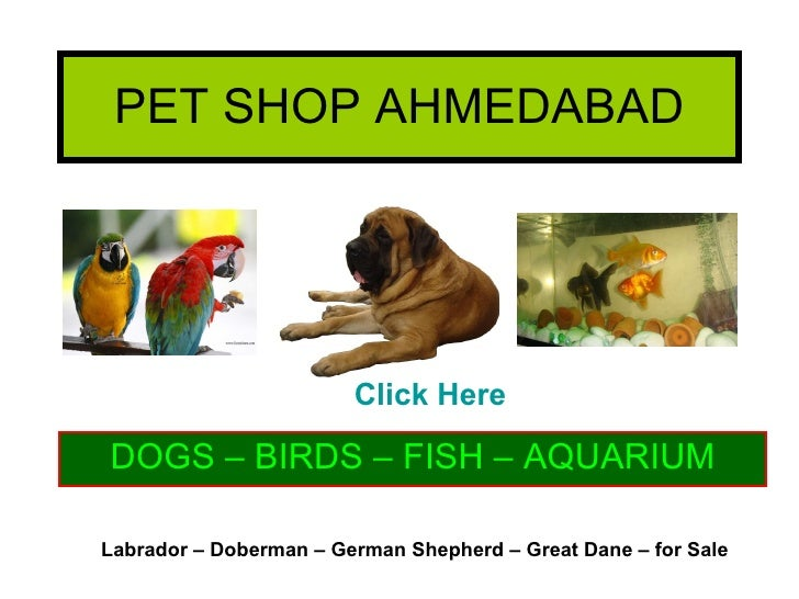 PET SHOP AHMEDABAD DOGS – BIRDS – FISH – AQUARIUM Labrador – Doberman – German Shepherd – Great Dane – for Sale Click Here