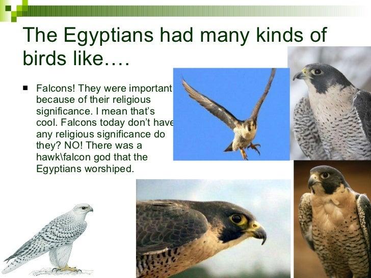Pets Of Anceint Egypt