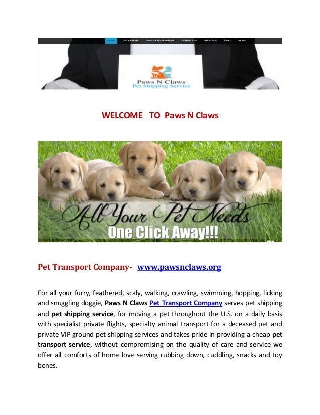 Pet Transport Company | Pet shipping service