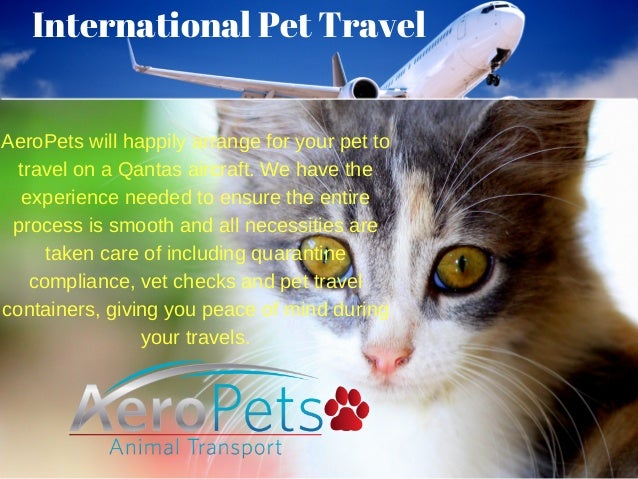 Need Information On Pet Travel Service