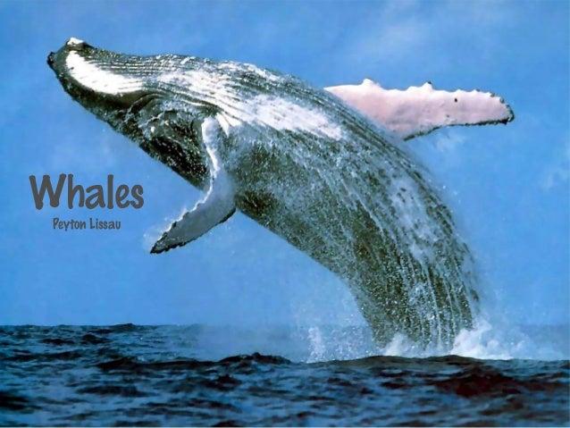 WhalesPeyton Lissau