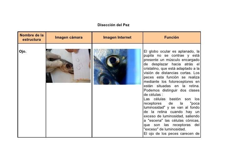 Disección del PezNombre de la               Imagen cámara      Imagen Internet               Función estructuraOjo.       ...