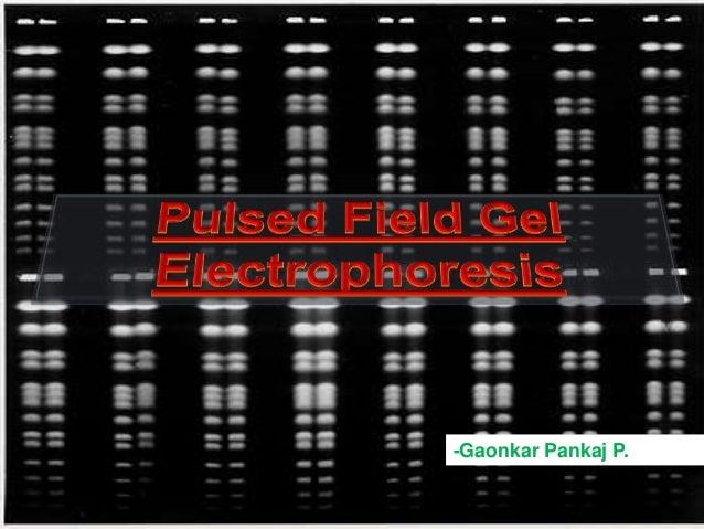 Pulse Field Gel Electrophoresis