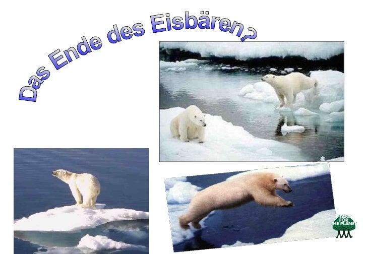 Das Ende des Eisbären?
