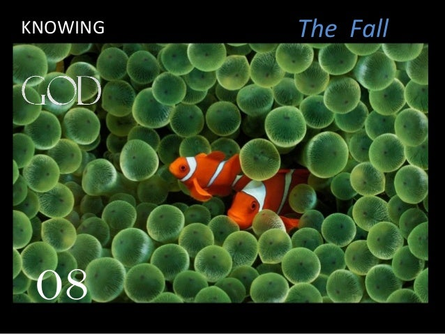 08 The FallKNOWING