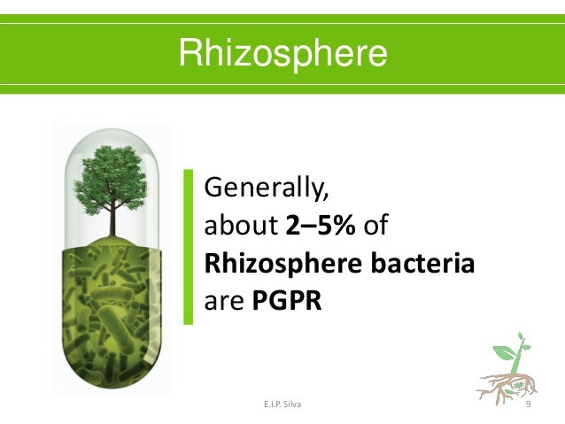 PGPR - Plant Growth Promoting Rhizobacteria