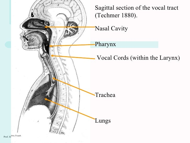 Ph1 speech organs 2010 the mouth 8 ccuart Gallery