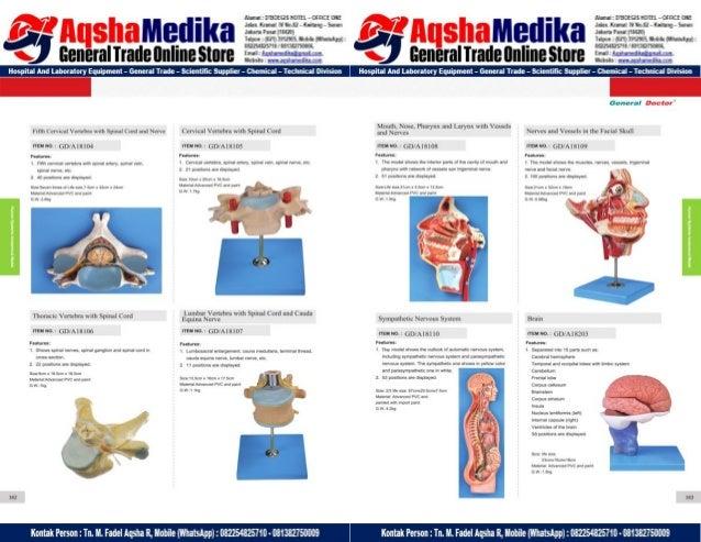 Phantom Alat Peraga Kesehatan General Doctor Product Catalog 2017-2018 – Hal.95