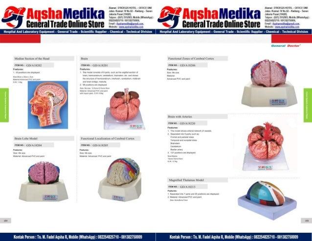 Phantom Alat Peraga Kesehatan General Doctor Product Catalog 2017-2018 – Hal.96