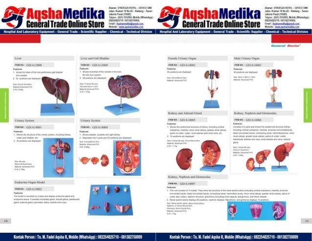 Phantom Alat Peraga Kesehatan General Doctor Product Catalog 2017-2018 – Hal.99