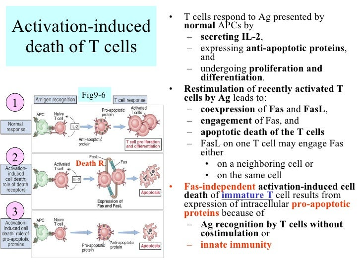activation induced cell deathとは