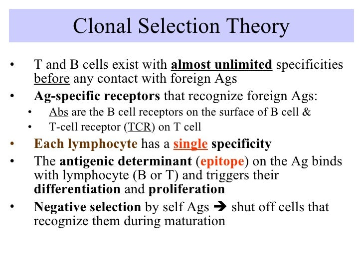 Clonal Selection Theory <ul><li>T and B cells exist with  almost unlimited  specificities  before  any contact with foreig...