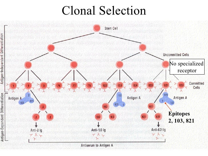 Clonal Selection Theory Pdf Download